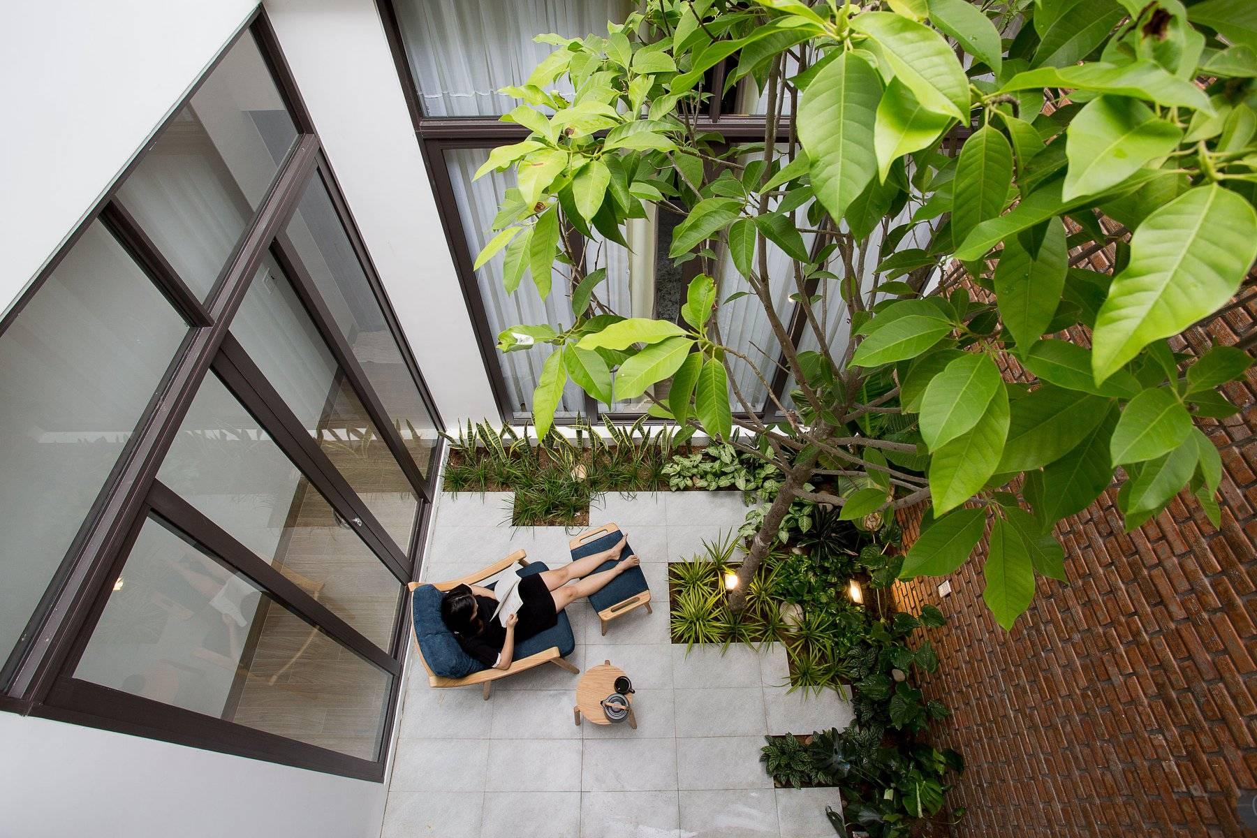 cây ngọc lan trồng nơi giếng trời