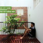 chọn cây xanh trồng nơi giếng trời